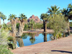 Lunch at a Desert Oasis in Papago Park