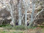Spring Training Optional Trip to Sedona & Verde Valley - Montezuma Castle