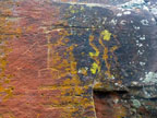 Spring Training Optional Trip to Sedona & Verde Valley - Red Tank Draw Petroglyphs