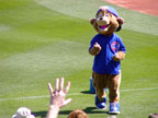 Cub Mascot at Spring Training in Sloan Park