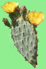 San Diego Padres - 2021 Cactus League Spring Training Schedule & Scores - Prickly Pear Cactus