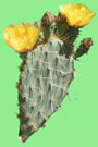 Redirect to Cleveland Indians - 2015 Cactus League Spring Training Schedule & Scores - Prickly Pear Cactus