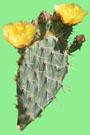 Arizona Diamondbacks - 2022 Cactus League Spring Training Schedule & Scores - Prickly Pear Cactus
