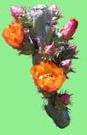 Cactus League 2022 Arizona Spring Training - Buckhorn Cholla Cactus